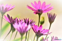 春に咲いた花  21-566