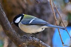 野山の鳥  21-248
