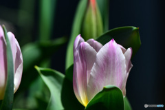 今年初 春の花   21-140