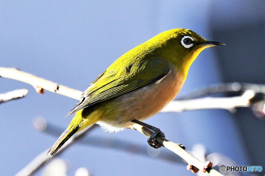 野山の鳥  21-266