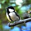 野山の鳥  488