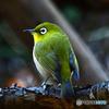 野山の鳥  234