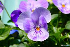 春に咲いた花  21-576