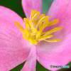 庭に咲いた花  560