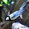 野山の鳥 飛び出し寸前  21-227
