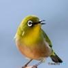 野山の鳥  150