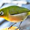野山の鳥  21-302