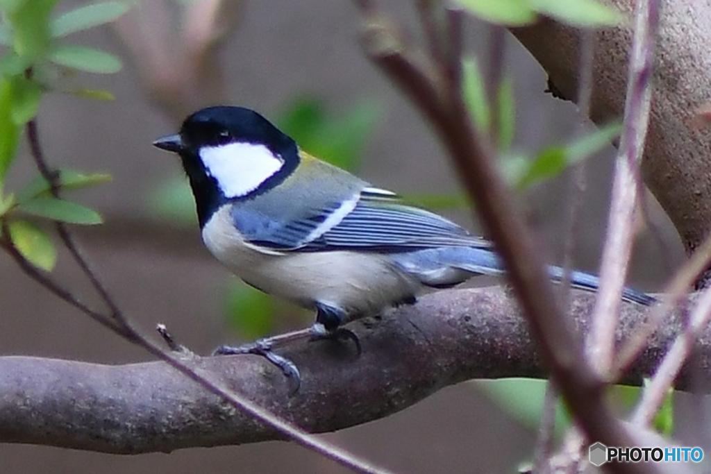 野山の鳥   21-208