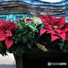 2017年のTDLでクリスマス飾り  549