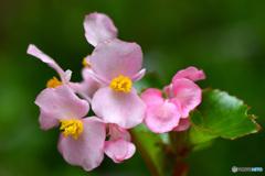 庭に咲いた花  21-630