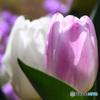 庭に咲いた春の花   21-185