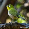 野山の鳥 207