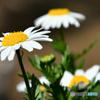 庭に咲いた花   21-200