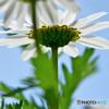 春の花  21-230