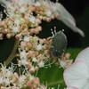 私も花粉まみれです。