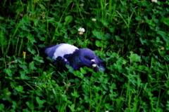 草むらに埋もれてみたかった。