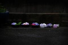 カップ生花