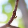 アリが集まる