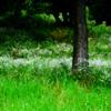 梅雨、草生い茂る頃