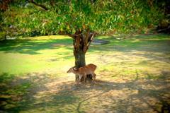 木陰で木影模様に囲まれて。