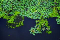 水面のタイル模様