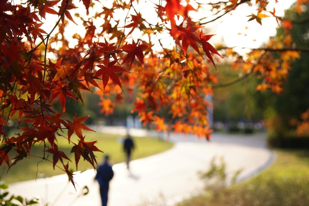 秋を裏から覗く