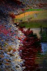 水辺の晩秋