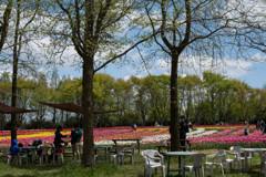 世羅高原の春1