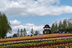 世羅高原の春2
