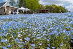 世羅高原の春4