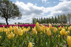 世羅高原の春6