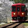 長良川鉄道 桜