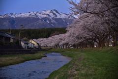 桜と鳥海山