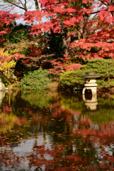 日本庭園の秋