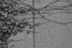 蔦の絡まるチャペールで♪~