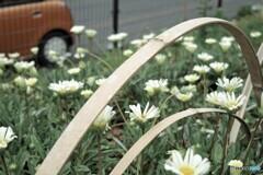 花壇の花 1