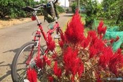 赤い自転車で赤い物探しポタリング
