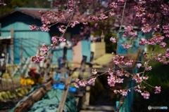 オールドレンズで 美和桜