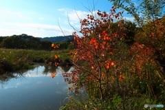 遊水地の紅葉
