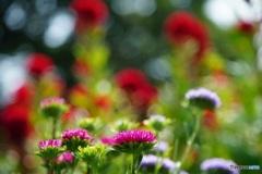 小さな花畑