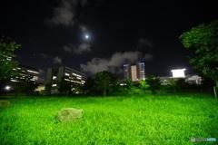 夜スナップ 駿府城公園