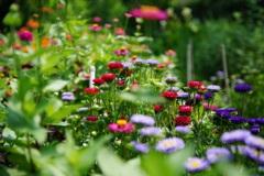 小さな花畑 2
