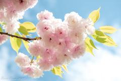 春の新宿御苑⑤
