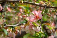 春の新宿御苑④