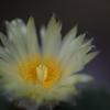 咲くやこの花館 サボテン