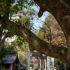 歴史を見てきた大木
