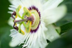 花。。。踊り子