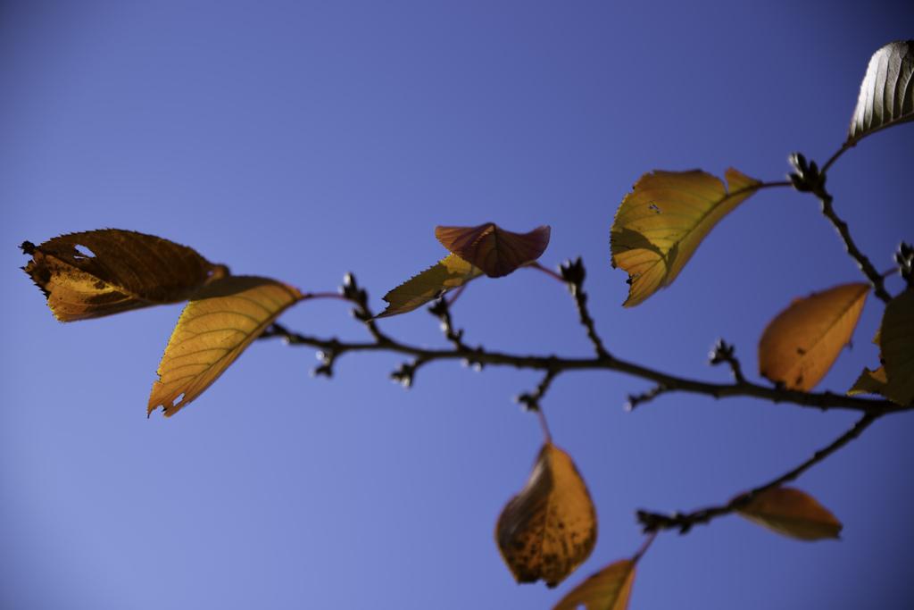 青空に紅葉が映えて。。。