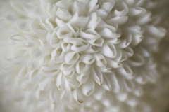 花びらのオブジェ