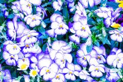 花々の輝き